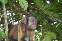 faune-singe